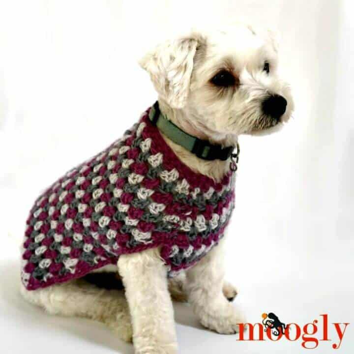 Cómo tejer un abrigo de perro bien vestido a crochet - Patrón gratuito
