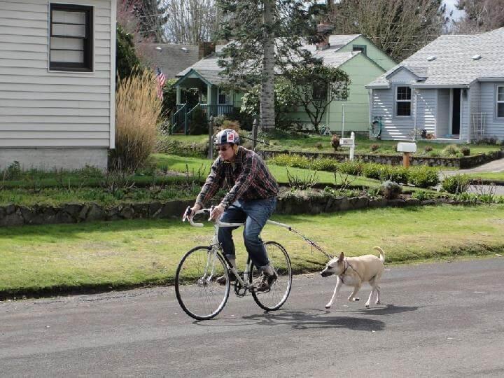 Correa para perro con cordón elástico para montar en bicicleta de bricolaje