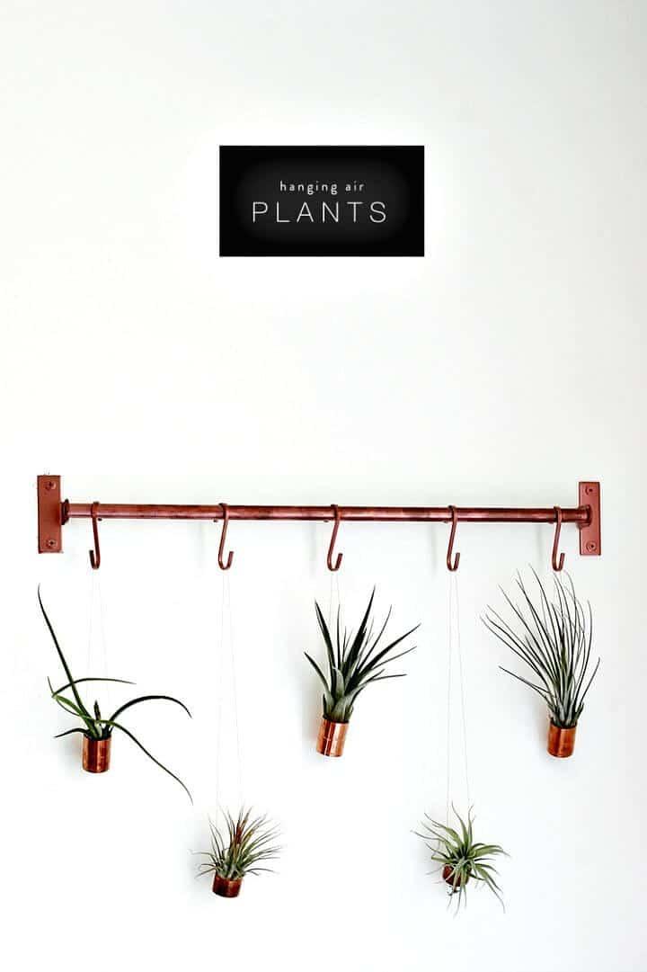 Plantas de aire colgantes de bricolaje