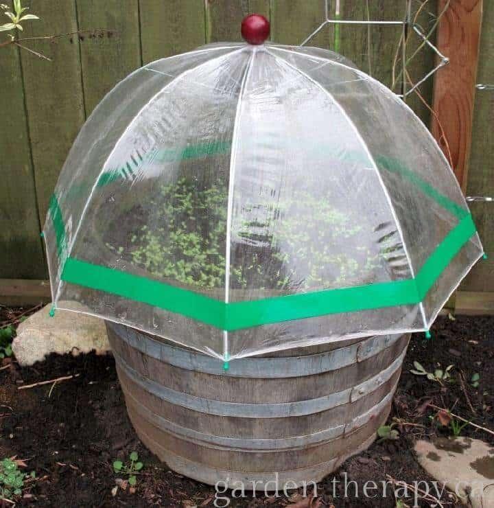 Invernadero de paraguas de bricolaje