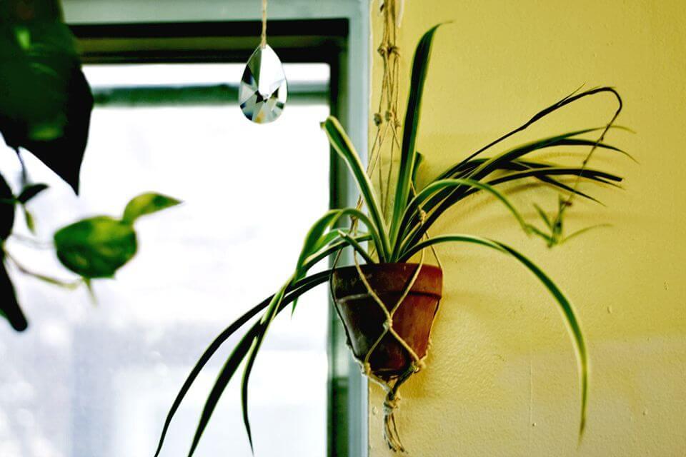 DIY un colgador de plantas de macramé fácil