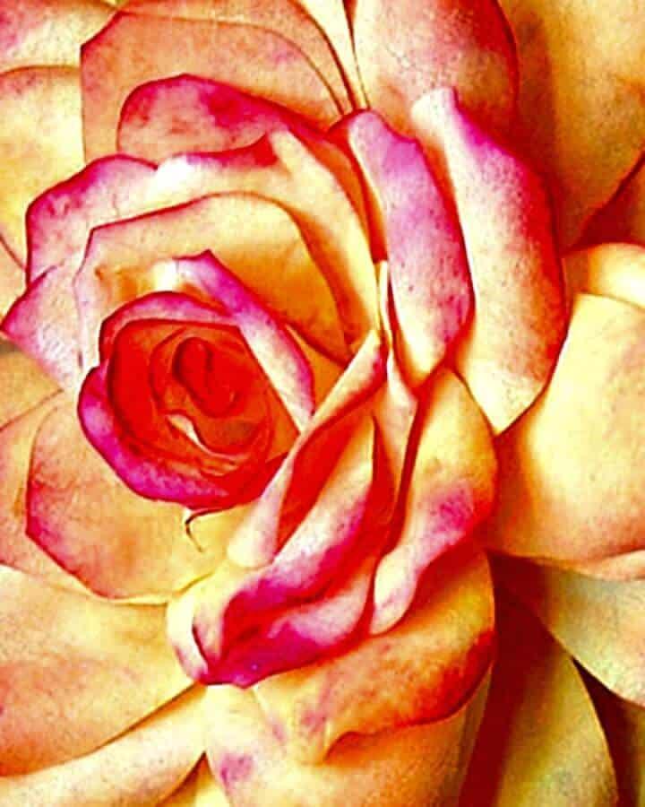 Rosas de papel de bricolaje simples