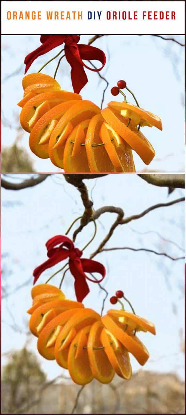 alimentador de oropéndolas corona de rodajas de naranja