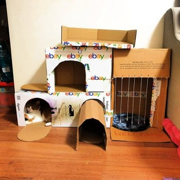 casa de cartón para gatos que puedes hacer en casa