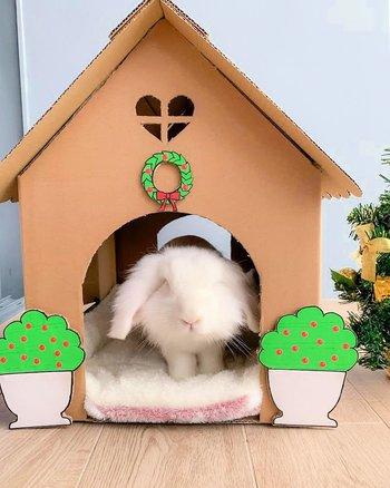 casa de conejo de cartón