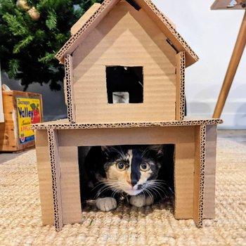 casa de gato de cartón simple bricolaje